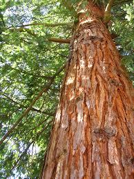 heavy timber